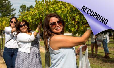 Harvest Fest Wine Adventure
